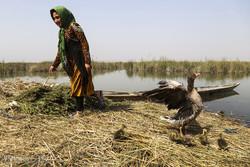 رهاسازی ۱۲۳هزار بچه ماهی در تالاب شادگان آغاز شد