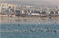 دریاچه شهدای خلیج فارس میزبان کمپین «مهمان حاج قاسم» میشود