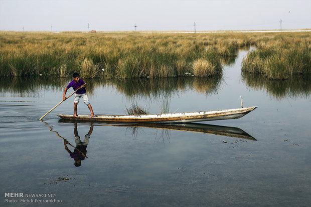 Shadegan Wetland