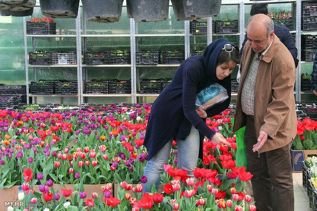 Tahran'da çiçek pazarı