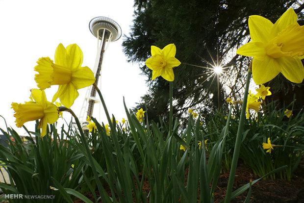 آغاز فصل بهار