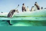 پنگوئنها به دنیای سینما برگشتند/ نیمه پنهان زندگیِ «امپراتور»