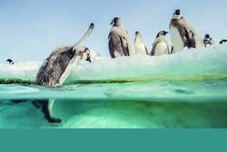 رژه پنگوئنهای 2