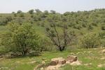 نگاهی به اکوتوریسم خراسان شمالی/طبیعتی که گردشگران را فرامیخواند