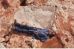 بزرگترین رد پای یک دایناسور کشف شد