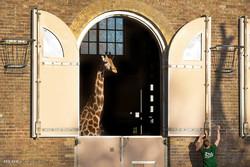 نگهداری از حیوانات در باغ وحش لندن