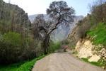 «کلم»؛ عروس روستاهای استان ایلام