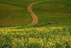 پیگیری سیاستهای افزایش سطح زیر کشت دانههای روغنی در اردبیل