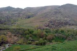 منطقه «گرین» نهاوند شکار ممنوع شد