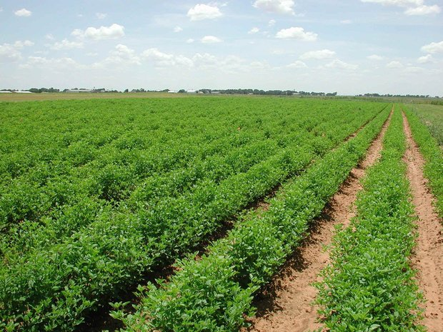 İran ile AB arasında tarımsal işbirliği başlıyor