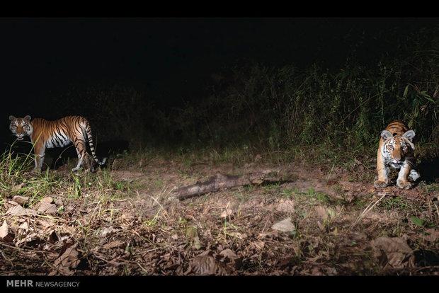 مختارات من صور الحيوانات حول العالم