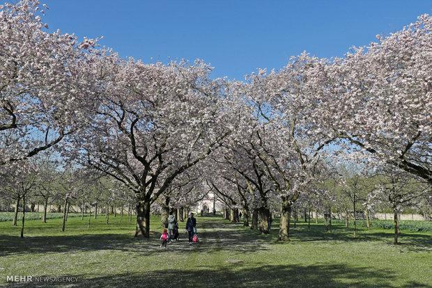 İlkbaharın gelişi ile ilgili fotoğraflar