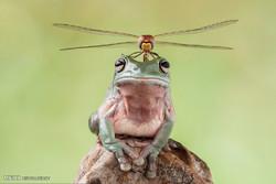 تصاویری از جهان طبیعت
