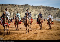 Camel riders are seen during a traditional competition in the southeastern Iranian port city of Chabahar, April 3, 2017.