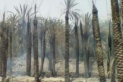 آتش سوزی نخلستان های روستای هیچان شهرستان نیکشهر