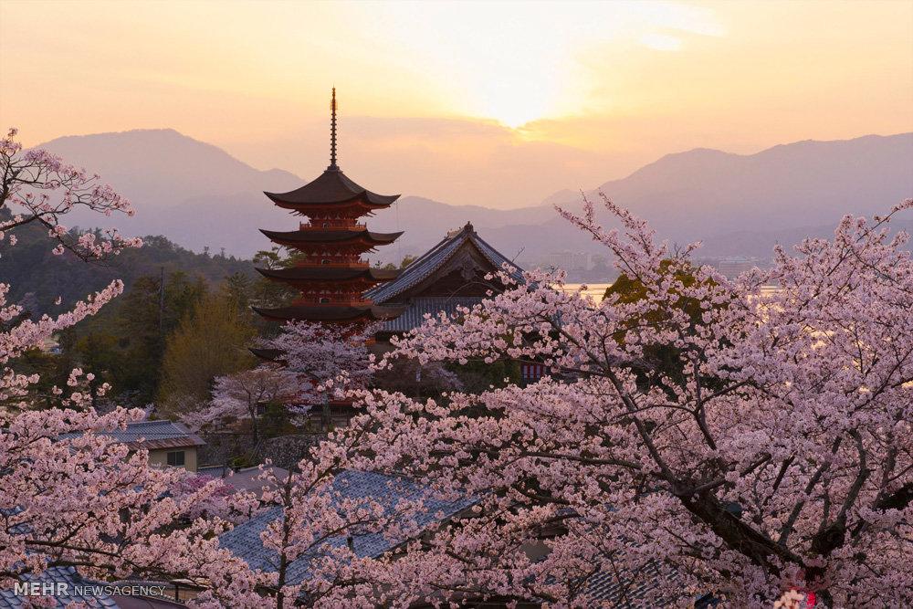 فصل بهار در مناطق محتلف جهان