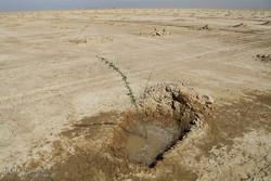 مالچ پاشی در خوزستان به هیچ وجه انجام نمی شود