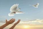 ۳۷ زندانی البرزی آزاد شدند/آزادی ۷۲ نفر به نیت ایام محرم
