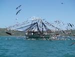 کشتی صیادی