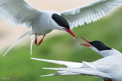 حیوانات پارک های ملی انگلیس