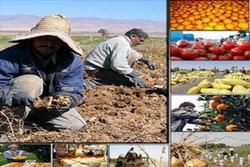 متوسط ارزش افزوده تولیدات کشاورزی آذربایجان غربی به ۲۵ درصد رسید