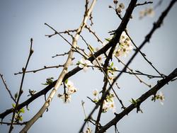 فیلم بهار در گیلان
