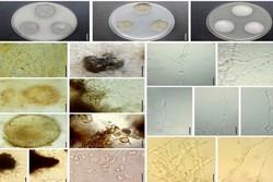 شناسایی بیش از ۵ میلیون گونه قارچ دردنیا/اهدای سومین جایزه حجارود