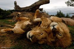 حیوانات مقابل دوربین مخفی