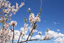 Hemedan'da İlkbahar mevsimi