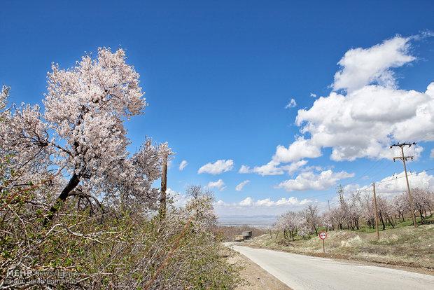 طبيعة الربيع في محافظة همدان