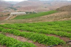 کشاورزی قزوین