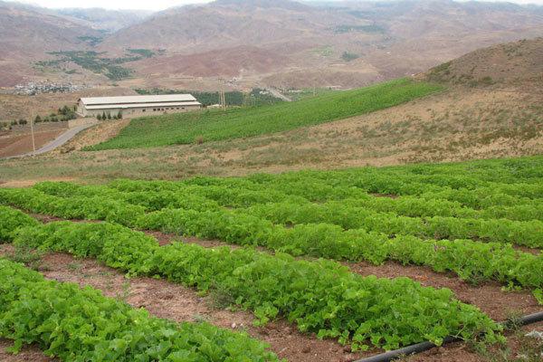 ارتفاع الاستثمار الخارجي في قطاع الزراعة بعد الاتفاق النووي 300 ضعفا