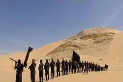 یک باند تروریستی در شمال سیناء مصر متلاشی شد