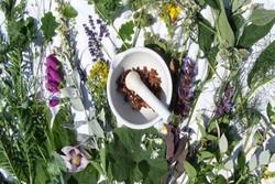 راه اندازی باغ گیاهان دارویی در یکی از دانشگاه های علوم پزشکی