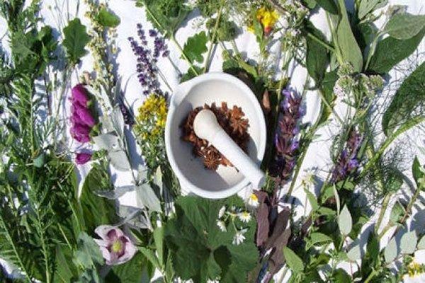 کنگره بین المللی زیست فناوری گیاهان دارویی برگزار می شود