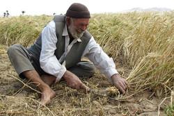 تعطیلی کشاورزی یک روستا/ طرح مکانیزه آب را به روی کشاورزان بست
