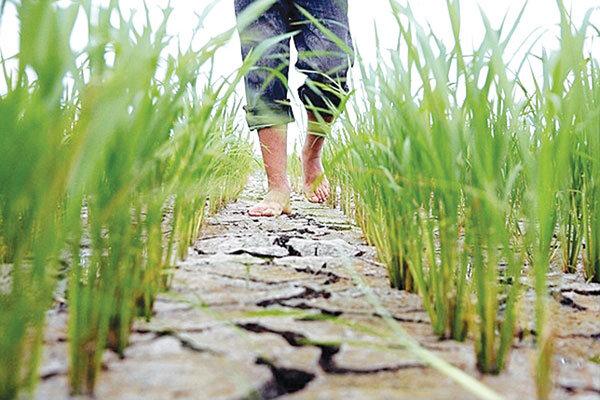 سوگند نخستوزیر ژاپن برای حمایت از کشاورزان آسیب دیده از سیل