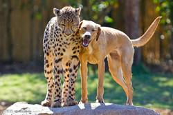 حیوانات کی باہمی دوستی