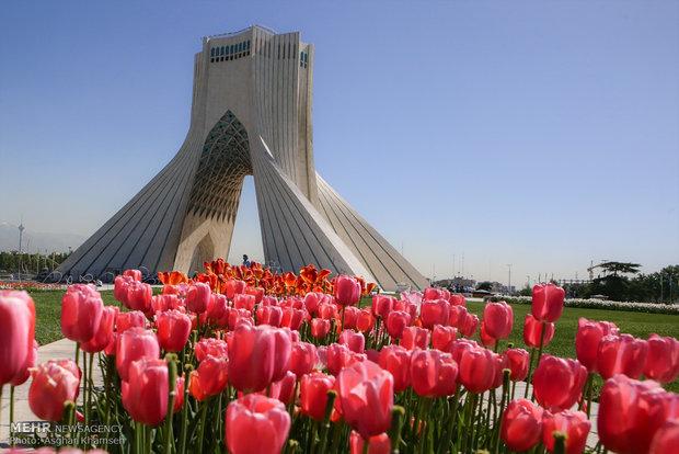 رنگین کمان لاله ها در تهران