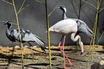 Astara, home of rare species of birds