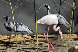 تنوع  گونه های نادر پرندگان در باغ پرندگان شهر مرزی آستارا