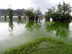 Steel wetland, Astara, Gilan province