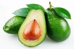 مصرف روزانه «آووکادو» موجب حفظ سلامت روده می شود