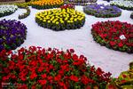 قدرت شگفت آور عطر گل ها بر سلامت افراد