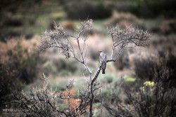 فريق سويدي صديق للطيور يزور حديقة كلستان الوطنية في ايران /صور