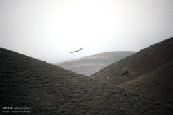 تور پرنده نگری در سنندج برگزار شد