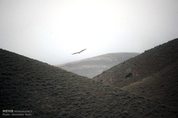 Golestan Natl. Park hosts Swedish birdwaching group