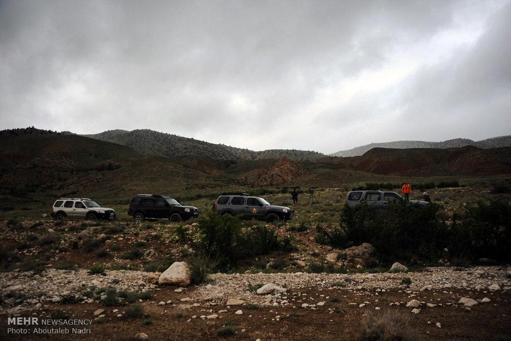 حضور تیم پرنده نگری سوئدی در پارک ملی گلستان