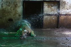 تصاویر منتخب حیات وحش در هفته گذشته
