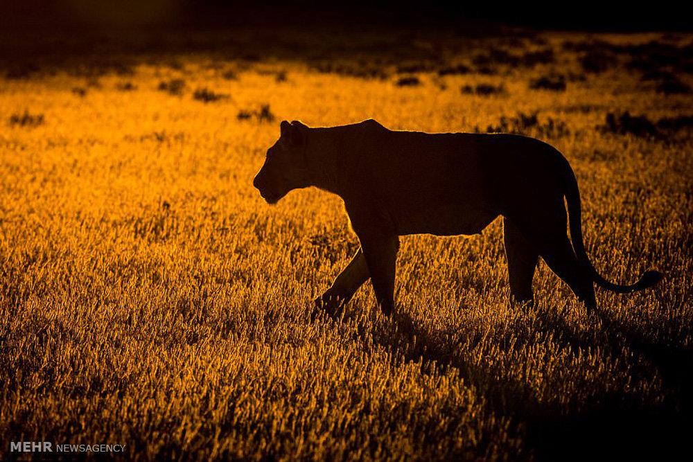 حیوانات در هنگام طلوع و غروب خورشید